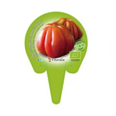 plantel-tomate-corazón-de-buey