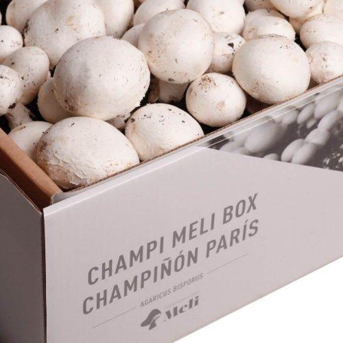 kit-autocultivo-champinon-paris-agaricus-bisporis-gardeneas-4