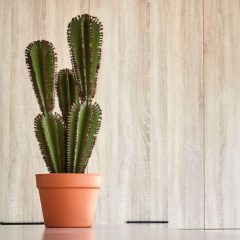 74010039-planta-artificial-euphorbia-suzannae-90-cm-2