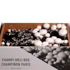 kit-autocultivo-champiñon-paris-agaricus-bisporis-gardeneas-2