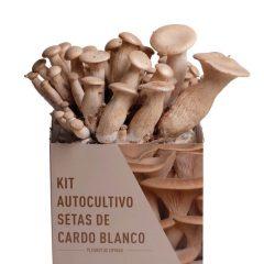kit-autocultivo-setas-de-cardo-blanco-pleurotus-eryngii-gardeneas-2