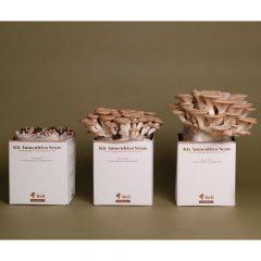kit-autocultivo-setas-de-cardo-blanco-pleurotus-eryngii-gardeneas-5