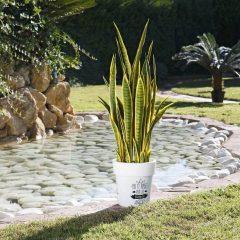 planta-artificial-lengua-de-tigre-bicolor-105-cm-74010009-2