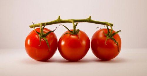 todo-sobre-el-tomate