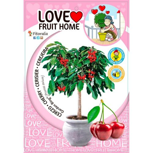 cerezo-enano-garden-bing-5l-prunus-avium-1