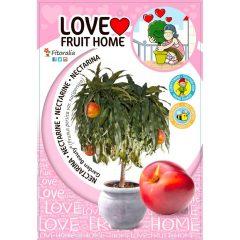 nectarino-enano-garden-beauty-5l-prunus-persica-var-nucipersica-1
