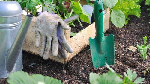 Cómo-cuidar-tus-plantas-en-verano