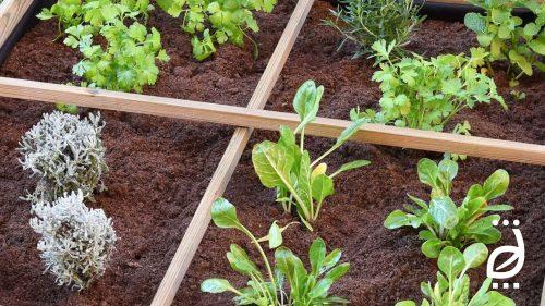 T3-BANNER-BLOG-Que-cultivar-en-mayo