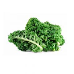 planton-kale-105-cm-gama-tradicional