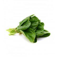 planton-de-espinaca-6-uds-gama-tradicional