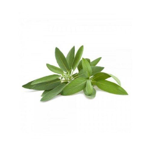 planton-de-salvia-6-uds-gama-tradicional